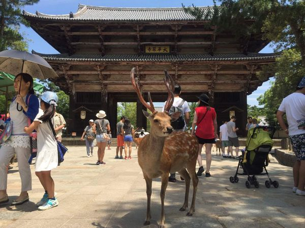 Japanimals 3 -The Deer of Nara Park